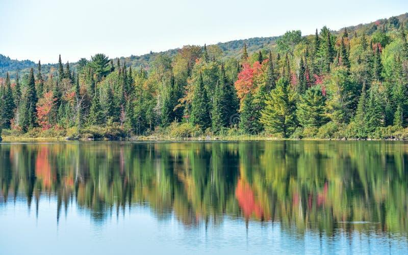 Färgrika Autumn Forest i Kanada arkivfoto