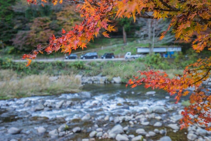 Färgrika Autumn Leaf och flod i korankeien, Japan royaltyfri fotografi