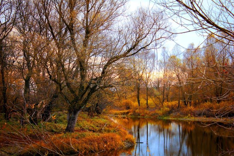 Färgrika Autumn River With i lösa trän royaltyfri bild