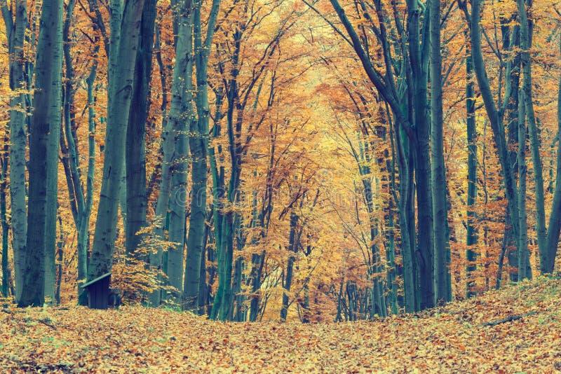 Färgrika Autumn Trees In Forest royaltyfri foto