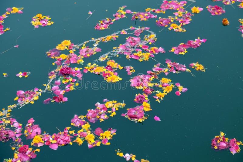 Färgrika blom- offerings, kronblad, blommor och girlander som svävar i Pushkar sjön, Indien arkivfoto