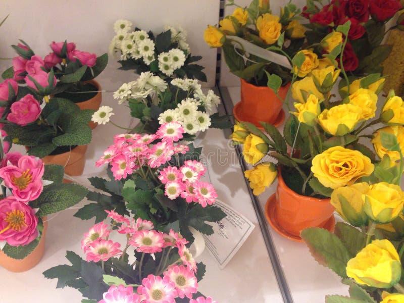 färgrika blommor arkivfoto