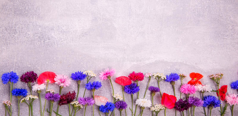 Färgrika blommor av blåklinter, den lantliga buketten valde i sommar som lokaliserades på konkret bakgrund royaltyfri bild