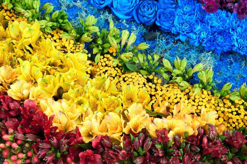 färgrika blommor för bakgrund Aster rosor, freesiablommor royaltyfri fotografi