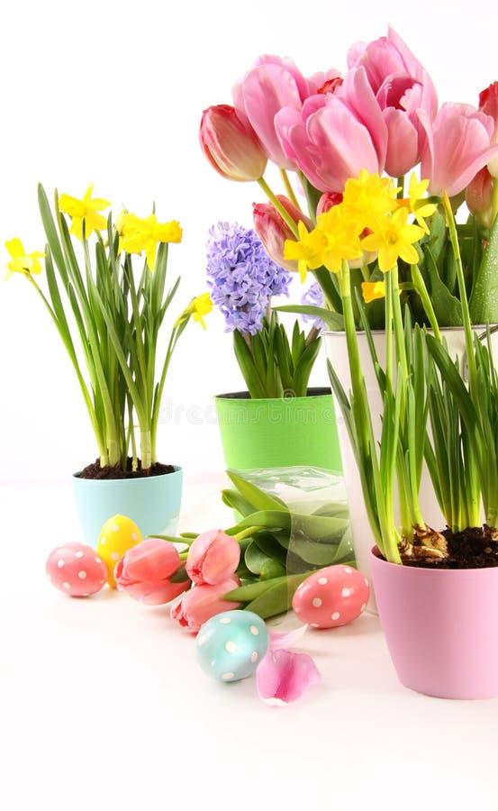 Färgrika blommor för påsk i vit bakgrund fotografering för bildbyråer