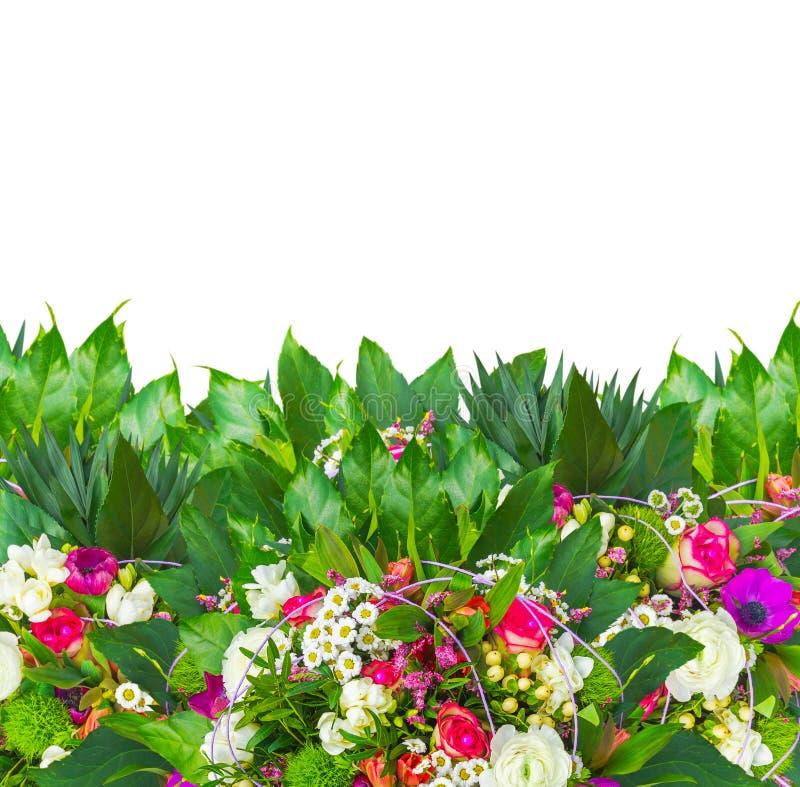 Färgrika blommor gränsar med freesia, anemon, steg, tusenskönan, smörblomman som isoleras royaltyfria bilder