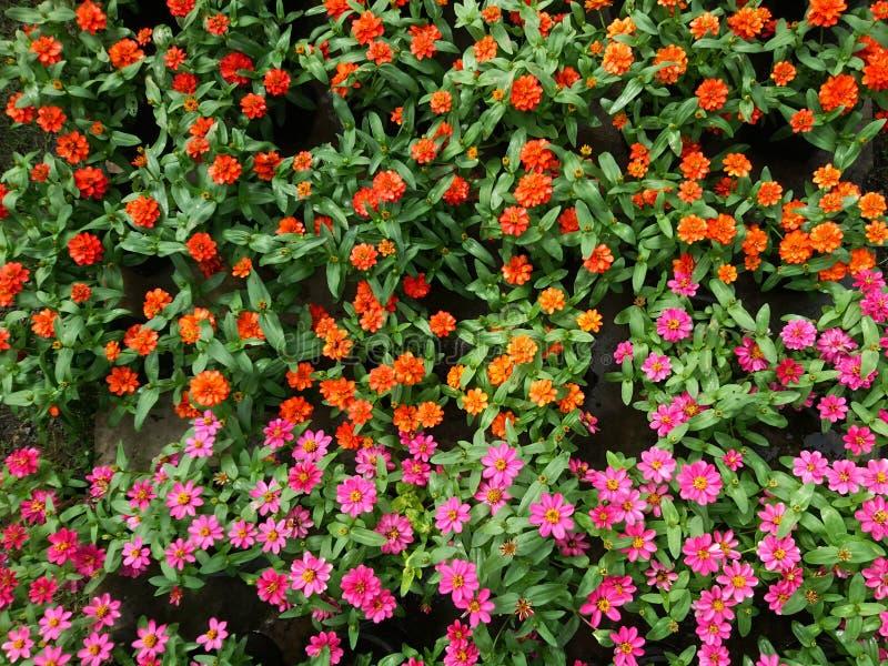 Färgrika blommor i modell arkivfoto