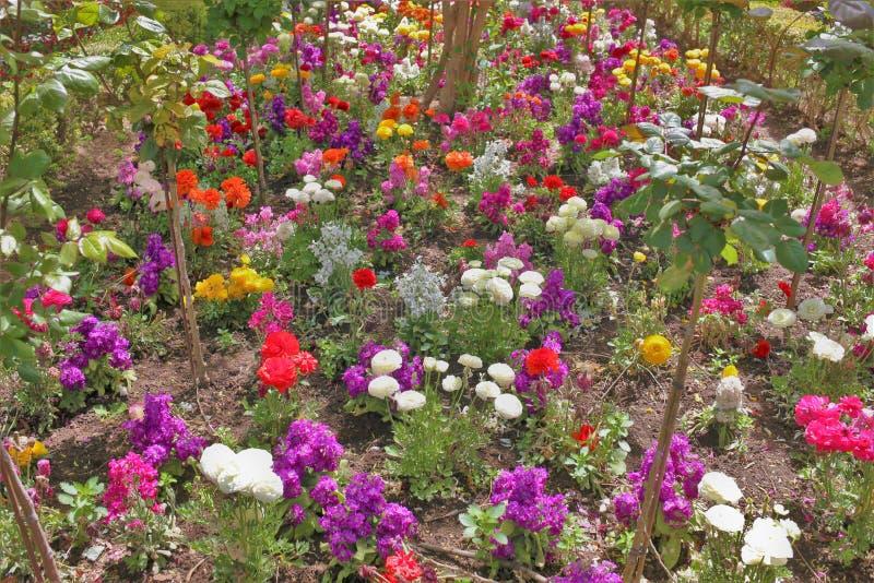 Färgrika blommor i trädgårdarna av Alhambraen royaltyfria bilder