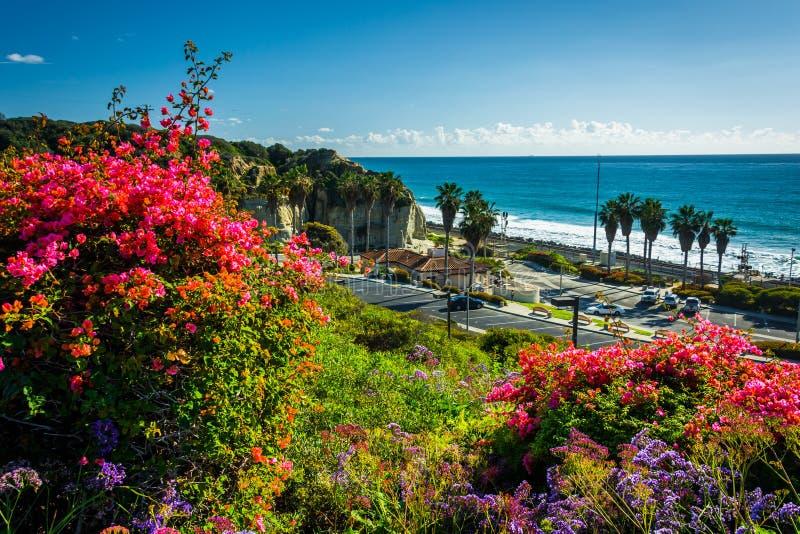 Färgrika blommor och sikt av San Clemente State Beach arkivbilder