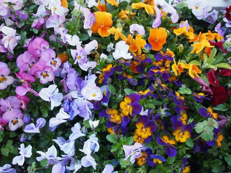 Färgrika blommor Osaka Japan Travel arkivfoton