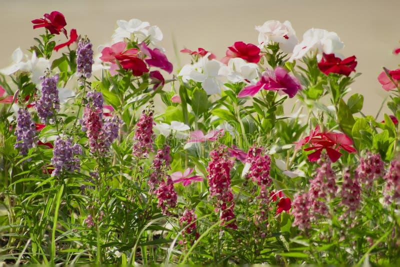 Färgrika blommor som är ordnade in artfully i en trädgårds- säng fotografering för bildbyråer