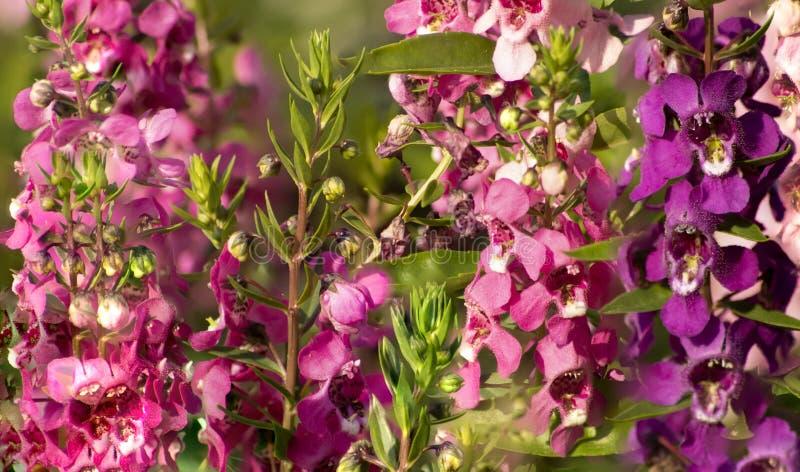 Färgrika blommor som är ordnade in artfully i en trädgårds- säng royaltyfri fotografi