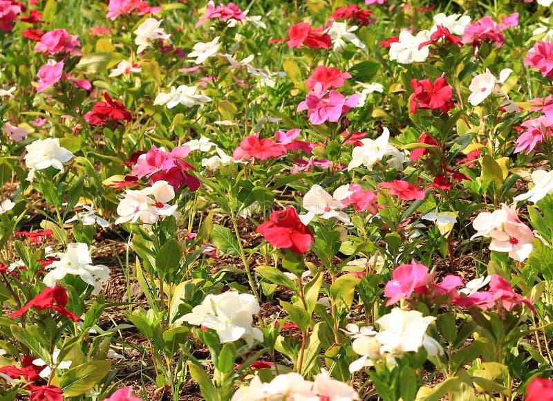 Färgrika blommor som är ordnade in artfully i en trädgårds- säng arkivfoton