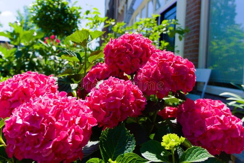 Färgrika blommor som blommar i sommarsolen royaltyfria bilder