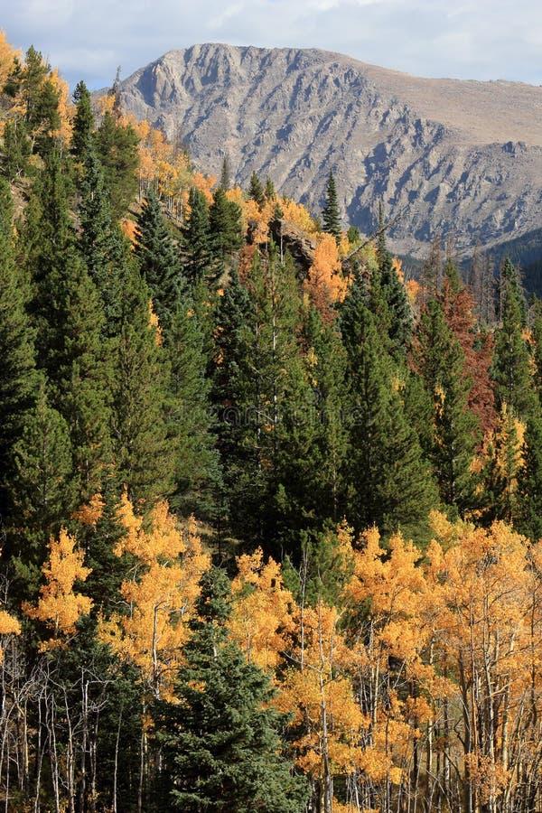 Färgrika Colorado Autumn Scene royaltyfria bilder