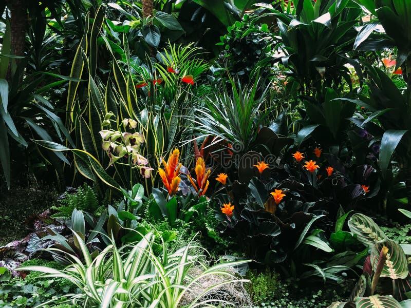Färgrika exotiska blommor i trädgård royaltyfria bilder