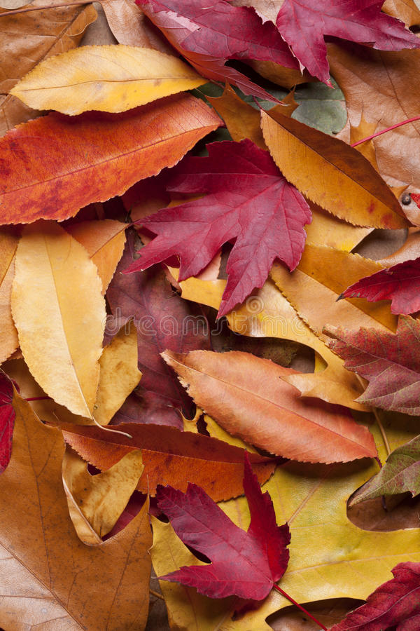 Download Färgrika FallLeaves fotografering för bildbyråer. Bild av closeup - 27286157