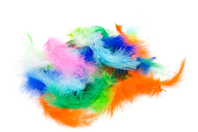 färgrika fjädrar royaltyfri foto