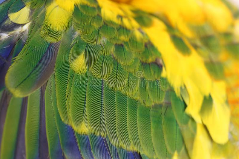 Färgrika fjädrar bakgrund, naturbakgrund och textur arkivbild