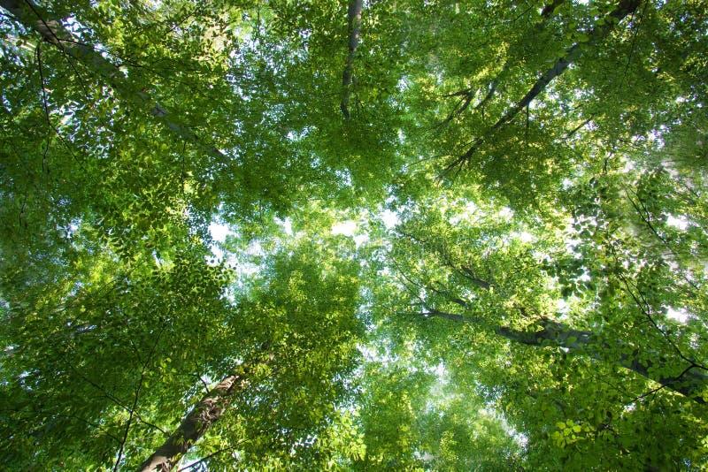 Färgrika gröna treetops royaltyfri foto