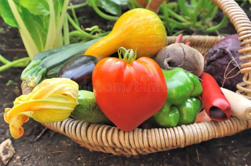 Färgrika grönsaker i korg fotografering för bildbyråer