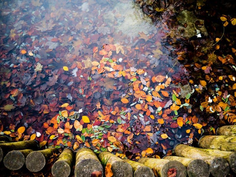 Färgrika höstblad i vattnet arkivfoton