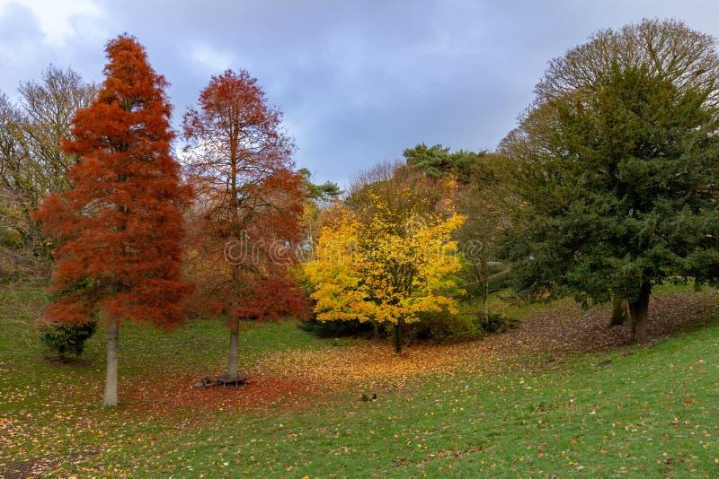 Färgrika höstträd i Williamson Park, Lancaster royaltyfri fotografi
