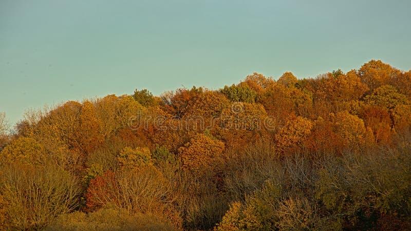 Färgrika höstträdgamla käringar i en skog i den flemish bygden arkivfoto