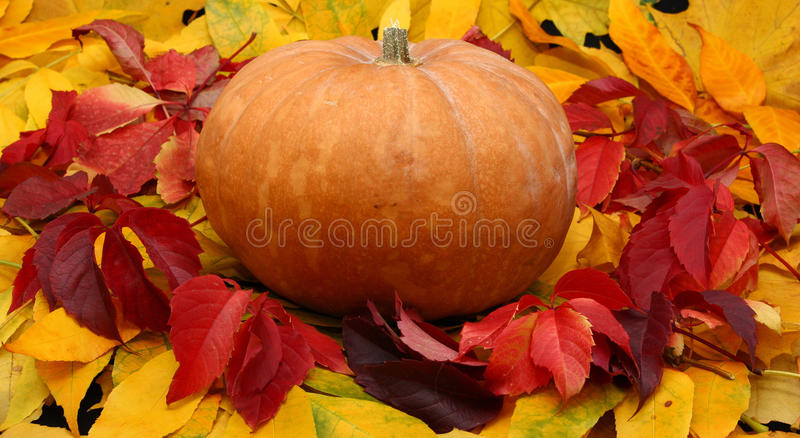 färgrika halloween låter vara pumpa royaltyfri fotografi