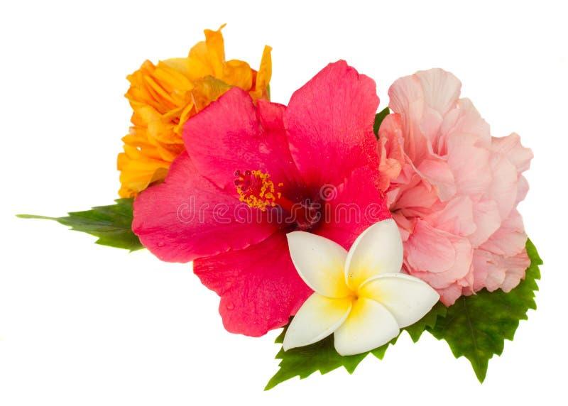 Färgrika hibiskusblommor royaltyfri fotografi
