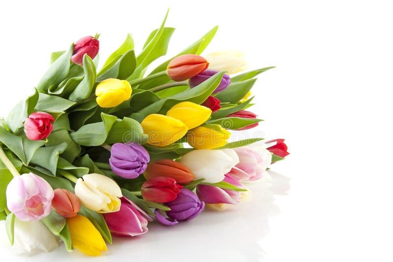 färgrika holländska tulpan för bukett arkivfoto