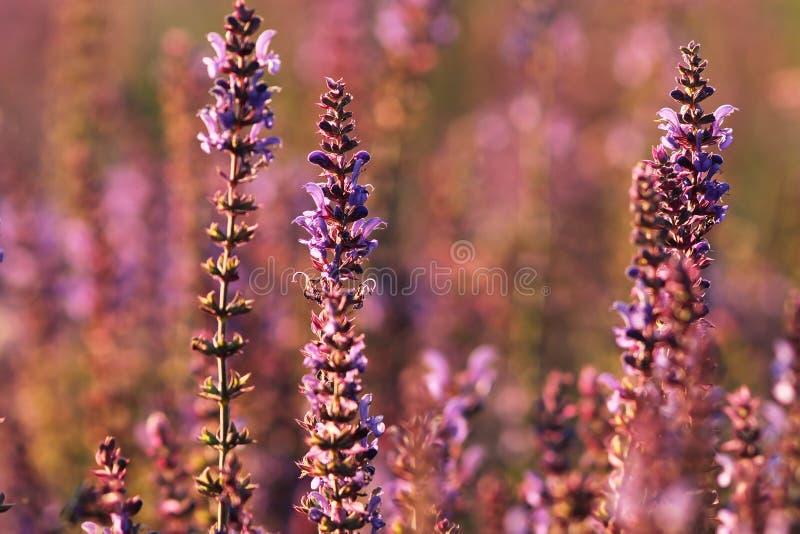 Färgrika lösa blommor på sommaräng arkivfoton