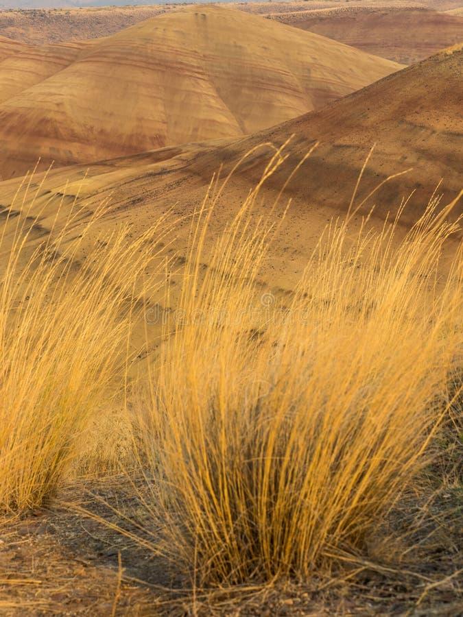 Färgrika lager av målat kullar och höstgräs royaltyfri foto