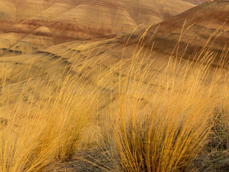 Färgrika lager av målat kullar och höstgräs arkivfoton