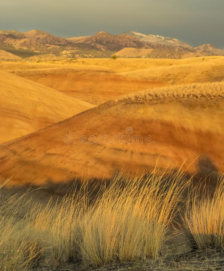 Färgrika lager av målat kullar och höstgräs royaltyfria foton