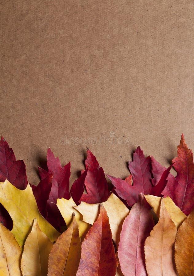 Download Färgrika Leaves arkivfoto. Bild av garnering, miljö, växt - 27286182