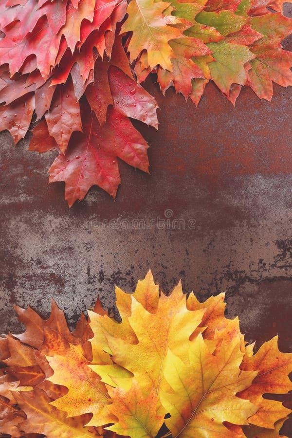 färgrika leaves för höst arkivfoto