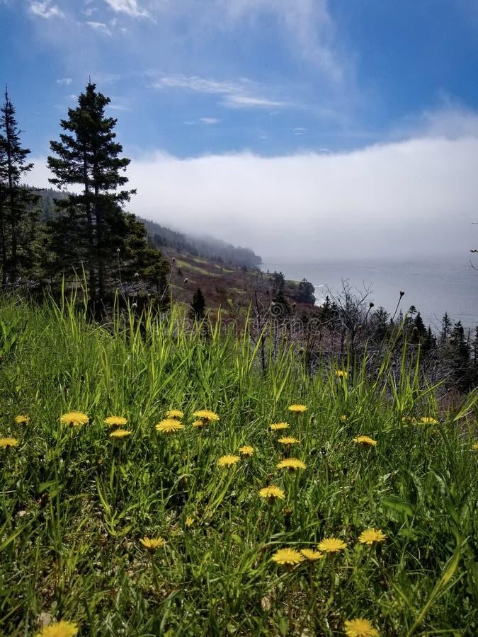 Färgrika maskrosor med dimmig kust- bakgrund arkivfoton