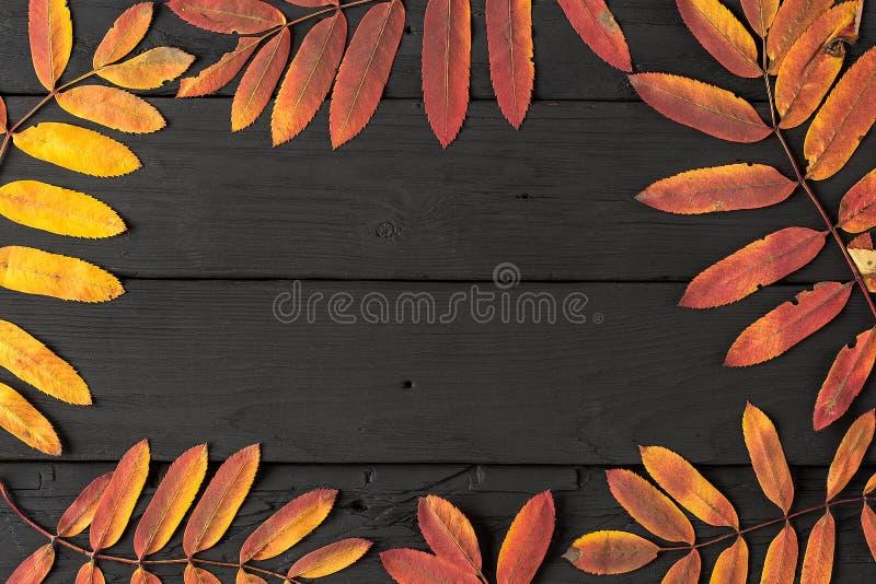 Färgrika nedgånglönnlöv på svart träbakgrund royaltyfri fotografi