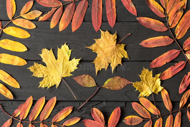 Färgrika nedgånglönnlöv på svart träbakgrund arkivfoto