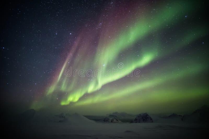 Färgrika nordliga ljus ovanför den arktiska glaciären och bergen - Svalbard, Spitsbergen royaltyfri fotografi