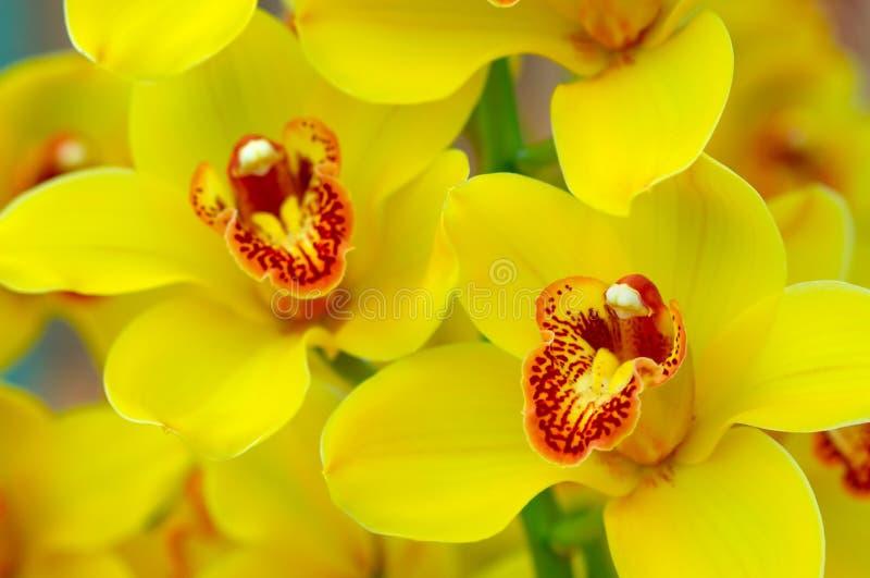 färgrika orchids arkivfoton