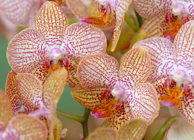 färgrika orchids arkivbilder