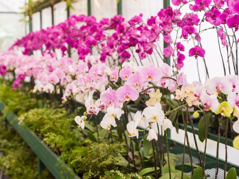 Färgrika orkidér royaltyfri fotografi