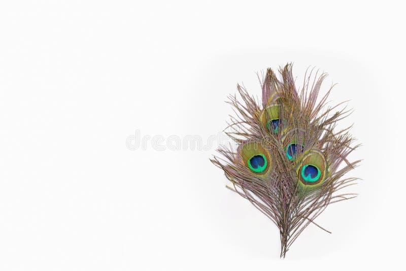 Färgrika påfågelfjädrar arkivbilder