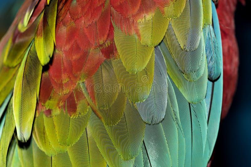 Färgrika papegojafjädrar royaltyfri foto
