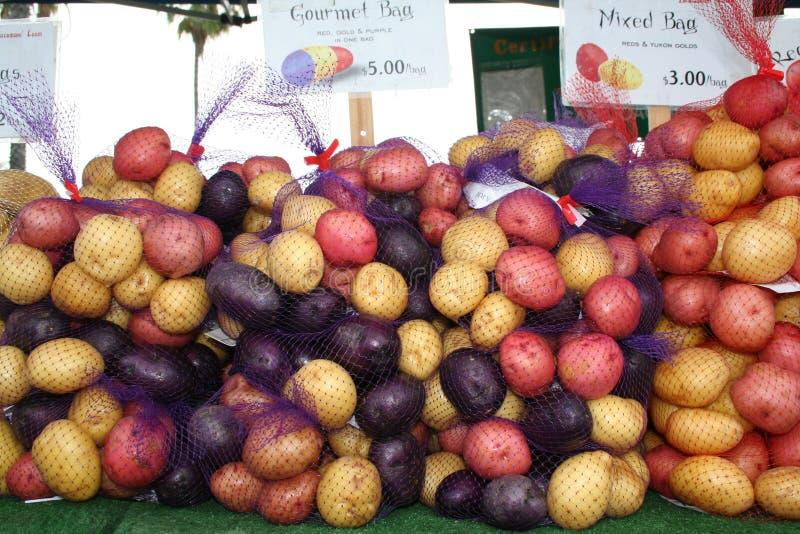 färgrika potatisar royaltyfria bilder