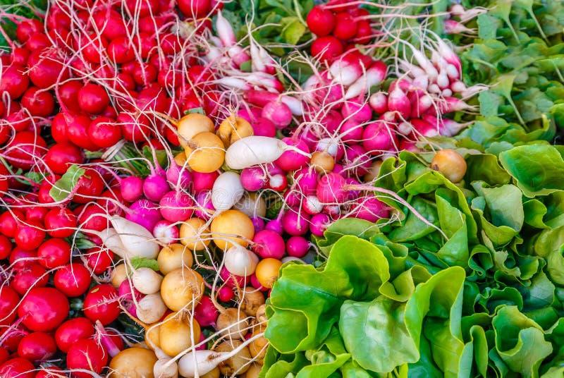 Färgrika rädisor och grönsallat royaltyfria bilder