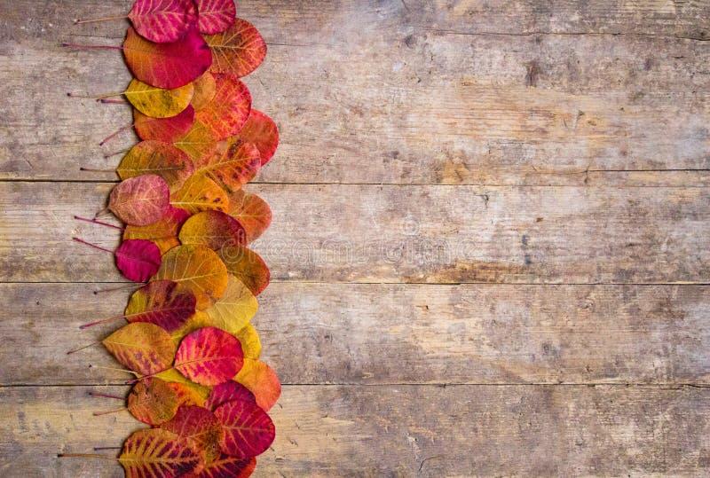 Färgrika röda höstleafes på texturerat lantligt träbräde för tappning arkivbild
