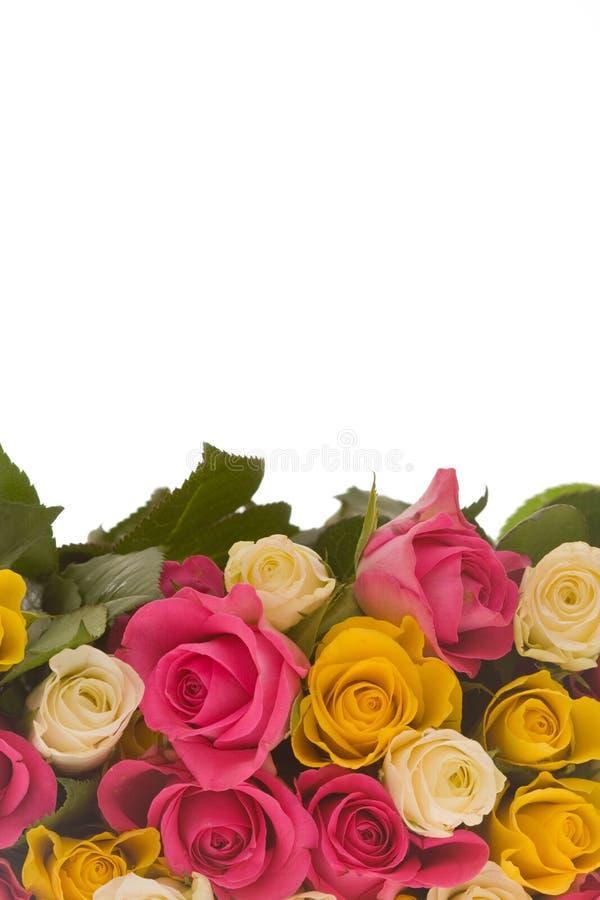 färgrika ro royaltyfria bilder
